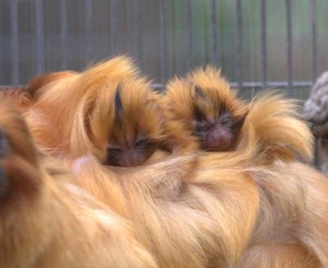 babymonkeys2