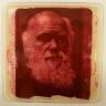 Petri Darwin